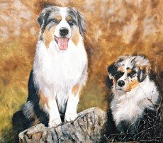 Australian Shepherds of the Mountain West : ❶Browse