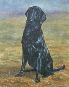 Flatcoat Retriever