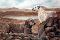 Irish Wolfhound Prints [ click to enlarge images ]